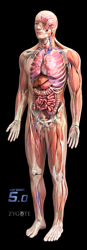 3d Models Human Anatomy Collection 50