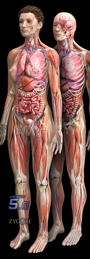 Male and Female Human Anatomy