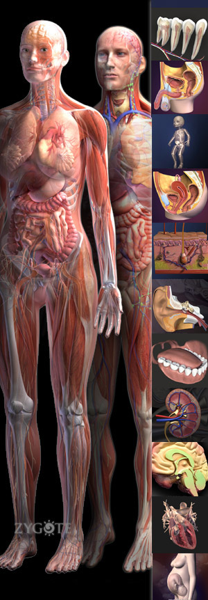 http://www.3dscience.com/img/Products/3D_Models/Human_Anatomy/Collections/Premier_Zygote_Human_Anatomy_Collection/Premier-Zygote-Human-Anatomy-web.jpg