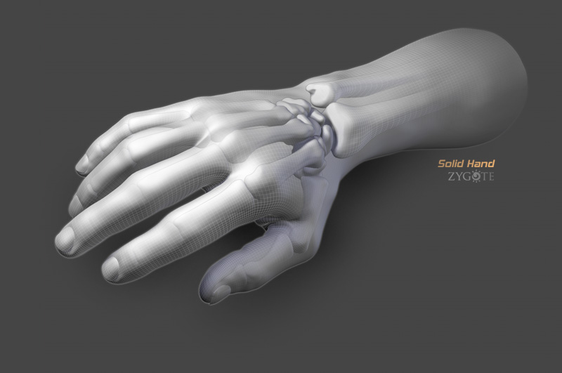 Solid 3D Hand Model