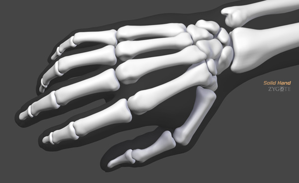 Solid 3d hand model ccuart Choice Image