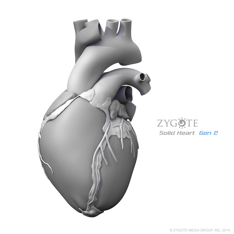 Human Heart Solid 3D Models