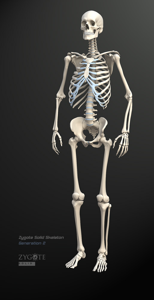 Solid 3D Skeleton Model
