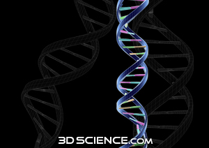 dna_2_web.jpg  (300 x 212 x 16777216) (50269 bytes)