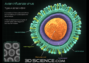 viruses_avian_flu_callouts_web.jpg  (300 x 212 x 16777216) (95816 bytes)