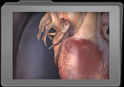 Human Anatomy 3D Models category thumbnail