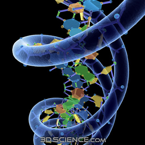 https://www.3dscience.com/img/Products/3D_Models/Biology/DNA/DNA_w_Phosphate_structure/Supporting_images/3d_model_DNA_w_phosphate_1.jpg